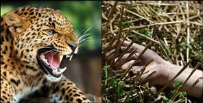 Pithoragarh leopard attack on women