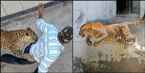 Leopard attack on people driving scooty in Pauri Garhwal