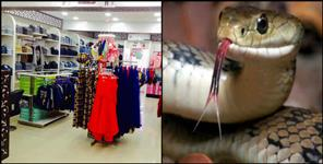 dehradun: Snake found at clothes shop in Dehradun