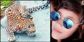 Leopard attack 16 year girl in bailparao nainital