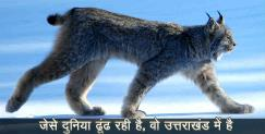 गंगोत्री: Links cat found in uttarakhand